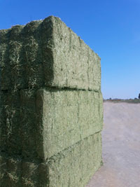 producto alfalfa