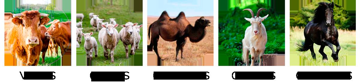 animales alfalfa